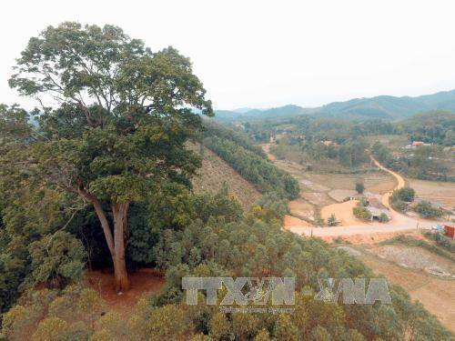 Bac Giang: Ancient tree receives national heritage status, environmental news, sci-tech news, vietnamnet bridge, english news, Vietnam news, news Vietnam, vietnamnet news, Vietnam net news, Vietnam latest news, Vietnam breaking news, vn news