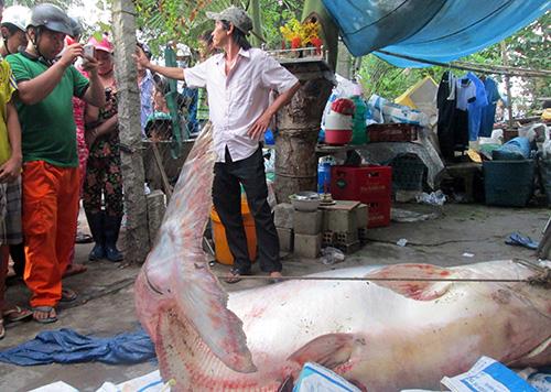 vietnamnet bridge, english news, Vietnam news, news Vietnam, vietnamnet news, TPP, US President Obama, Vietnam net news, Vietnam latest news, vn news, Vietnam breaking news, ca ho, blind fish, Mekong Delta