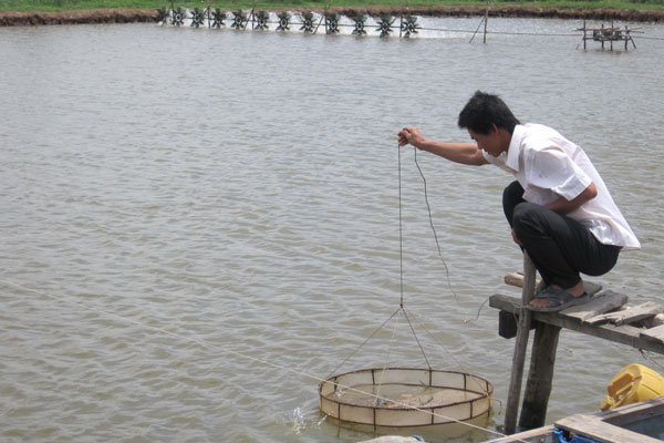 Brackish water shrimp farming faces severe damage, Vietnam's exports to US fall sharply in January, Wholesale markets seek HCM City's approval to raise fees, SCAVI aims for top global position in lingerie production
