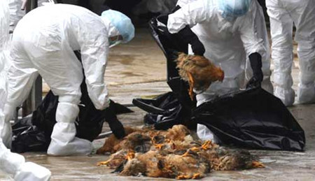 Vietnam takes action against bird flu, social news, vietnamnet bridge, english news, Vietnam news, news Vietnam, vietnamnet news, Vietnam net news, Vietnam latest news, vn news, Vietnam breaking news