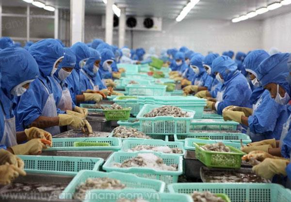 Shrimp Export Target Ambitious, But Achievable