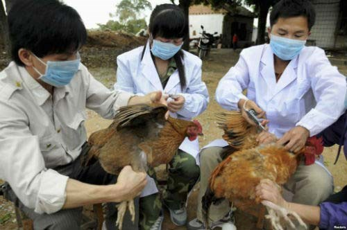 Lao Cai, Lang Son work to prevent cross-border avian flu, social news, vietnamnet bridge, english news, Vietnam news, news Vietnam, vietnamnet news, Vietnam net news, Vietnam latest news, vn news, Vietnam breaking news