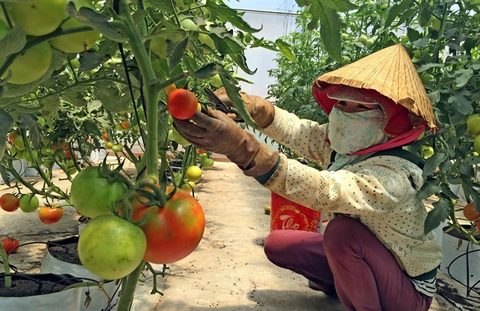Farming start-ups need more help
