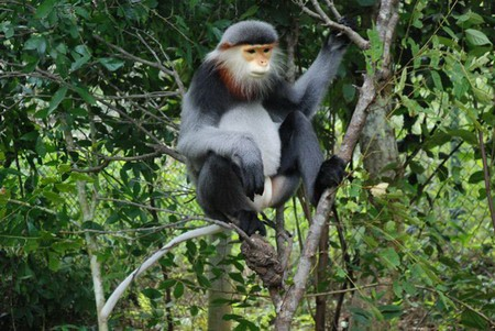 Endangered douc langurs rescued in Phu Yen