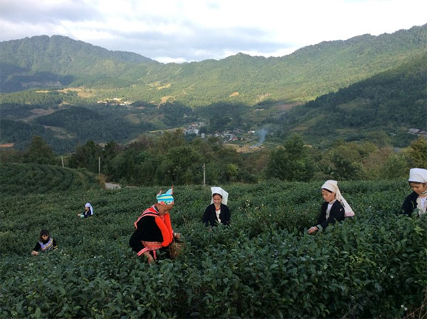 Top notch tea brews a highland recovery