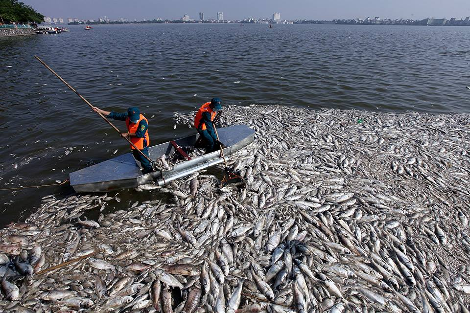 Hanoi to stop fish farming in the West Lake