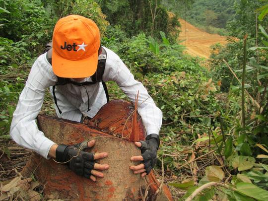 environmental news, sci-tech news, vietnamnet bridge, english news, Vietnam news, news Vietnam, vietnamnet news, Vietnam net news, Vietnam latest news, Vietnam breaking news, vn news,  Binh Phuoc, deforestation, environment pollution