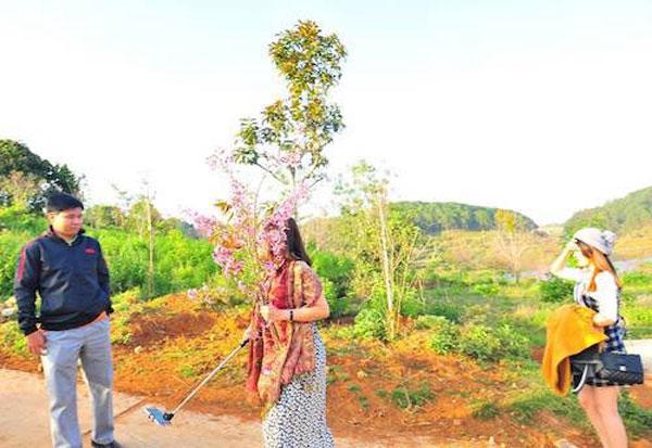 Da Lat City, Tuyen Lam Lake area, breaking off some flowering branches, Vietnam economy, Vietnamnet bridge, English news about Vietnam, Vietnam news, news about Vietnam, English news, Vietnamnet news, latest news on Vietnam, Vietnam