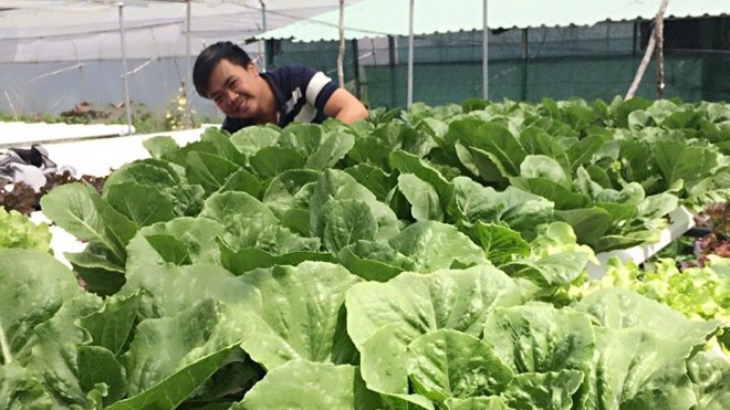 Students use seafood waste to grow safe vegetables