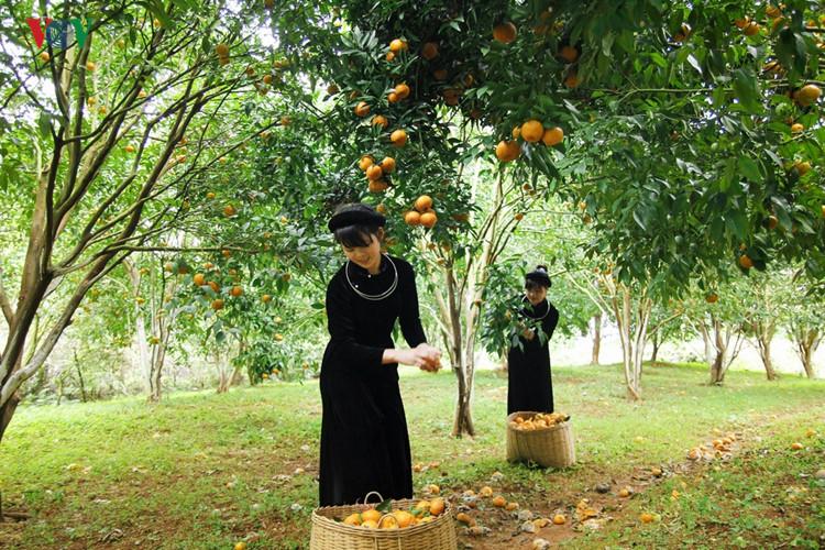 Northwest Vietnam ethnic women at work
