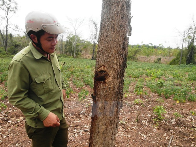 Tay Ninh investigates poisoning of forest trees, environmental news, sci-tech news, vietnamnet bridge, english news, Vietnam news, news Vietnam, vietnamnet news, Vietnam net news, Vietnam latest news, Vietnam breaking news, vn news