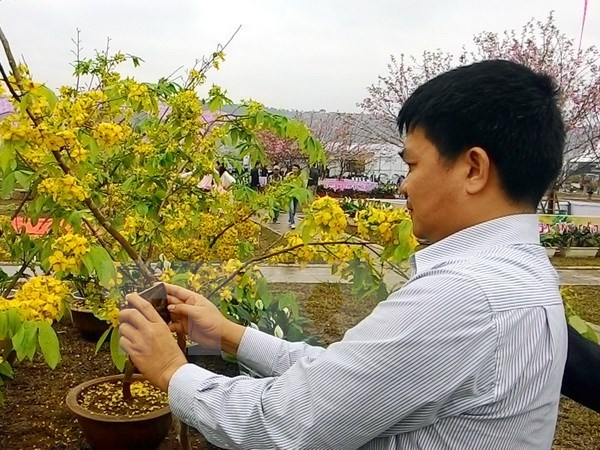 Cherry-yellow apricot blossom festival opens in Quang Ninh, entertainment events, entertainment news, entertainment activities, what's on, Vietnam culture, Vietnam tradition, vn news, Vietnam beauty, news Vietnam, Vietnam news, Vietnam net news, vietnamne