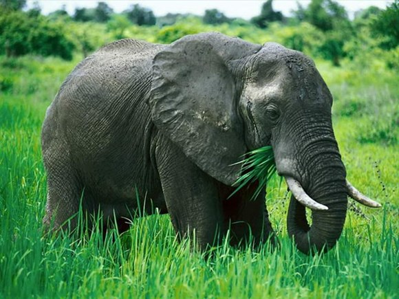 Quang Nam: over $5.6 mln for elephant conservation project