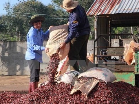 10 countries agree to protect Dak Lak coffee brand, vietnam economy, business news, vn news, vietnamnet bridge, english news, Vietnam news, news Vietnam, vietnamnet news, vn news, Vietnam net news, Vietnam latest news, Vietnam breaking news