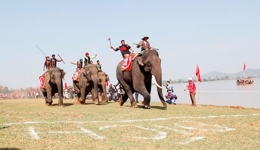 Elephant racing festival in Dak Lak
