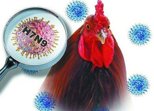 Tourism Administration warns people to keep away from bird flu-infected areastravel news, Vietnam guide, Vietnam airlines, Vietnam tour, tour Vietnam, Hanoi, ho chi minh city, Saigon, travelling to Vietnam, Vietnam travelling, Vietnam travel, vn news