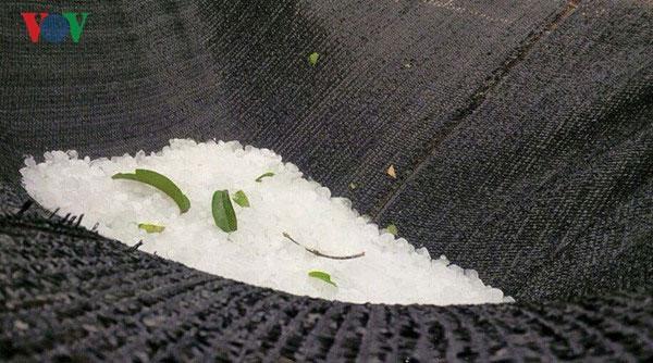 Thanh Hoa, hailstorm, Vietnam economy, Vietnamnet bridge, English news about Vietnam, Vietnam news, news about Vietnam, English news, Vietnamnet news, latest news on Vietnam, Vietnam