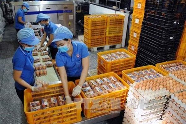 VietGAP standards, pork and vegetable origins, labels, Vietnam economy, Vietnamnet bridge, English news about Vietnam, Vietnam news, news about Vietnam, English news, Vietnamnet news, latest news on Vietnam, Vietnam