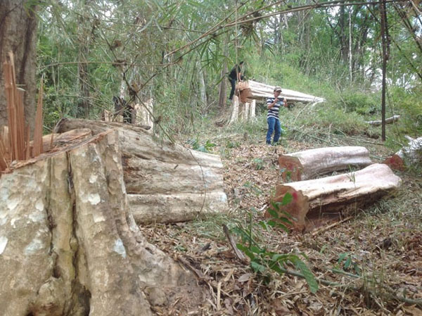 Illegal logging, smuggling found in protected Central Highlands forest