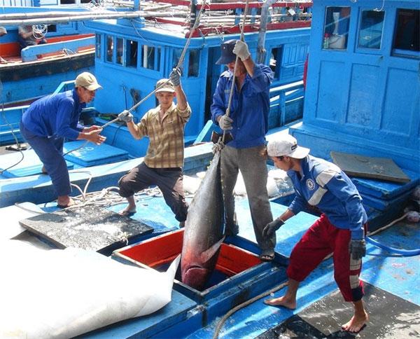 Vietnamese fishers, overfishing, Law on Fisheries, alarming situation, Vietnam economy, Vietnamnet bridge, English news about Vietnam, Vietnam news, news about Vietnam, English news, Vietnamnet news, latest news on Vietnam, Vietnam