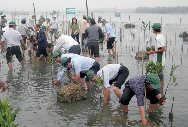 Thua Thien – Hue plants mangrove forests for eco-tours, IT news, sci-tech news, vietnamnet bridge, english news, Vietnam news, news Vietnam, vietnamnet news, Vietnam net news, Vietnam latest news, Vietnam breaking news, vn news