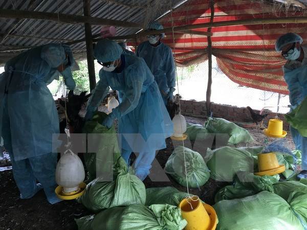 New A/H5N1 outbreak detected in Mekong Delta city