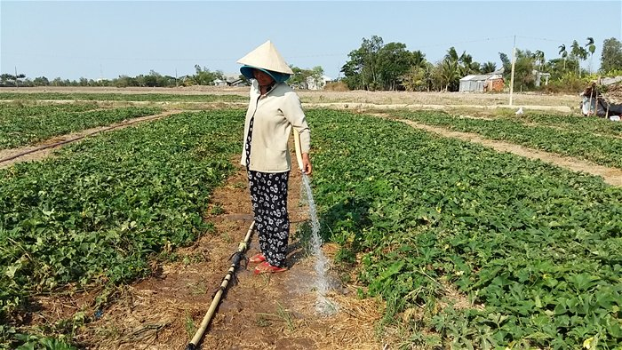 vietnam economy, business news, vn news, vietnamnet bridge, english news, Vietnam news, news Vietnam, vietnamnet news, vn news, Vietnam net news, Vietnam latest news, Vietnam breaking news, Mekong Delta, drought, climate change