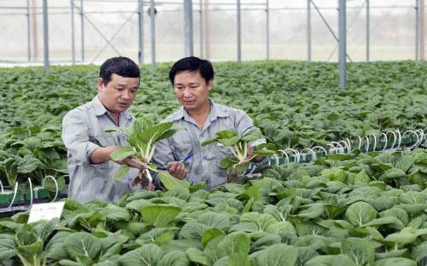 High-tech agriculture, agriculture insurance, Vietnam economy, Vietnamnet bridge, English news about Vietnam, Vietnam news, news about Vietnam, English news, Vietnamnet news, latest news on Vietnam, Vietnam