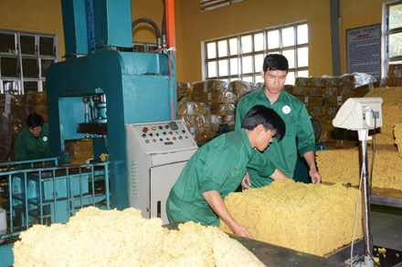 Labour shortage at rubber plantations in Central Highlands