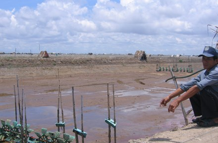 Mass shrimp deaths in Tra Vinh