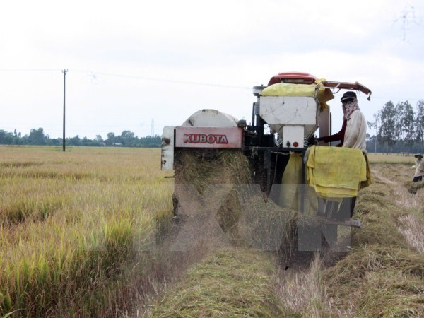 Rice exporters suffer losses due to sudden domestic price hike, vietnam economy, business news, vn news, vietnamnet bridge, english news, Vietnam news, news Vietnam, vietnamnet news, vn news, Vietnam net news, Vietnam latest news, Vietnam reaking news