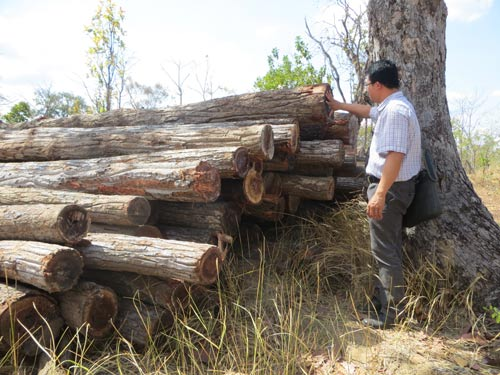 vietnam economy, business news, vn news, vietnamnet bridge, english news, Vietnam news, news Vietnam, vietnamnet news, vn news, Vietnam net news, Vietnam latest news, Vietnam breaking news, Ca Mau, SUF, deforestation