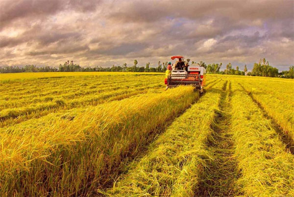 Sustainable agriculture, farmer owners, Vietnam economy, Vietnamnet bridge, English news about Vietnam, Vietnam news, news about Vietnam, English news, Vietnamnet news, latest news on Vietnam, Vietnam