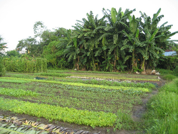 Concerns emerge over farmland limit rise, vietnam economy, business news, vn news, vietnamnet bridge, english news, Vietnam news, news Vietnam, vietnamnet news, vn news, Vietnam net news, Vietnam latest news, Vietnam reaking news