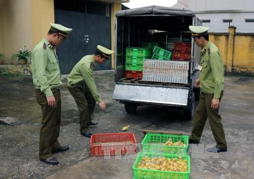 2,500 smuggled ducks from China seized in Hai Duong