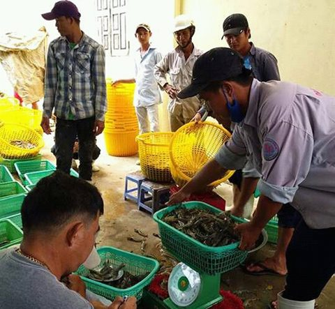 Mekong Delta launches crackdown on businesses injecting shrimp with agar, vietnam economy, business news, vn news, vietnamnet bridge, english news, Vietnam news, news Vietnam, vietnamnet news, vn news, Vietnam net news, Vietnam latest news, Vietnam reakin