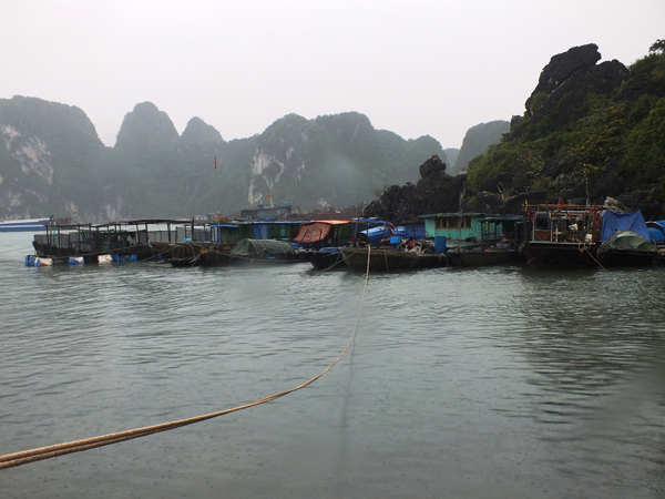 Quang Ninh Province revokes certificates of bad travel agents, shops, travel news, Vietnam guide, Vietnam airlines, Vietnam tour, tour Vietnam, Hanoi, ho chi minh city, Saigon, travelling to Vietnam, Vietnam travelling, Vietnam travel, vn news