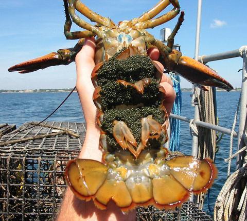 Affluent Vietnamese buy American lobsters, foreign fruits - News VietNamNet