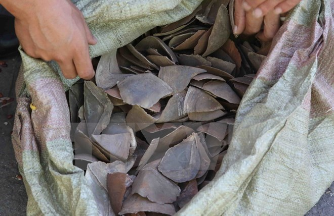 Smuggled pangolin scales discovered at Noi Bai airport, environmental news, sci-tech news, vietnamnet bridge, english news, Vietnam news, news Vietnam, vietnamnet news, Vietnam net news, Vietnam latest news, Vietnam breaking news, vn news