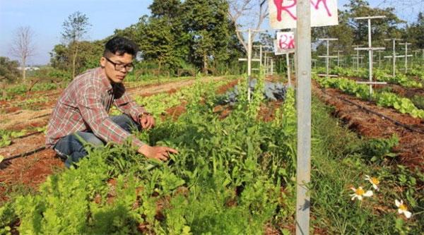 Vietnam garden has Israeli roots