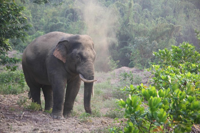 Measures proposed to conserve wild elephants in Dong Nai, environmental news, sci-tech news, vietnamnet bridge, english news, Vietnam news, news Vietnam, vietnamnet news, Vietnam net news, Vietnam latest news, Vietnam breaking news, vn news