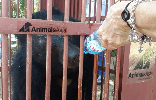 Animals Asia takes care of more captive bears, environmental news, sci-tech news, vietnamnet bridge, english news, Vietnam news, news Vietnam, vietnamnet news, Vietnam net news, Vietnam latest news, Vietnam breaking news, vn news
