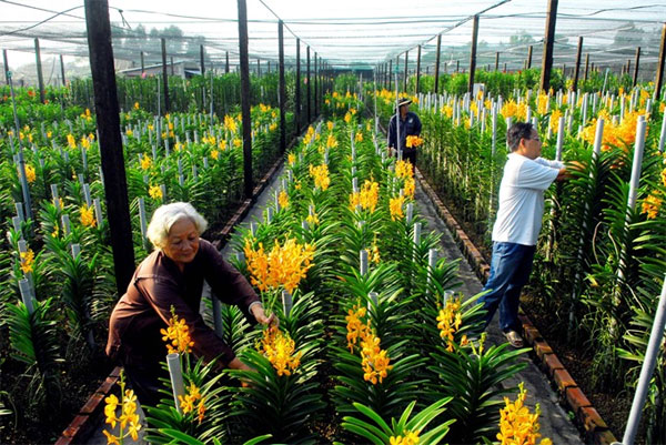 HCM City, hi-tech agriculture, VietGAP standards, Vietnam economy, Vietnamnet bridge, English news about Vietnam, Vietnam news, news about Vietnam, English news, Vietnamnet news, latest news on Vietnam, Vietnam