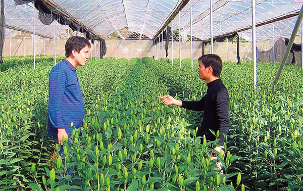 Pitfalls in hi-tech agricultural investment, vietnam economy, business news, vn news, vietnamnet bridge, english news, Vietnam news, news Vietnam, vietnamnet news, vn news, Vietnam net news, Vietnam latest news, Vietnam reaking news