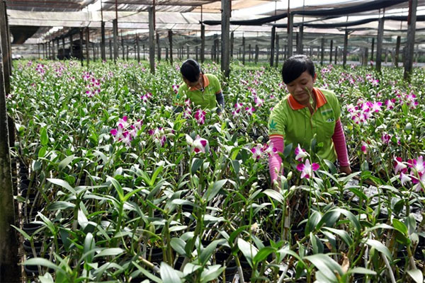 Cu Chi farms, Cu Chi Tunnel Complex, traditional craft villages, Vietnam economy, Vietnamnet bridge, English news about Vietnam, Vietnam news, news about Vietnam, English news, Vietnamnet news, latest news on Vietnam, Vietnam