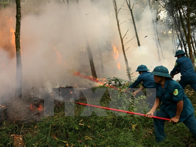 Central Highlands vigilant at forest fires during dry season peak, environmental news, sci-tech news, vietnamnet bridge, english news, Vietnam news, news Vietnam, vietnamnet news, Vietnam net news, Vietnam latest news, Vietnam breaking news, vn news
