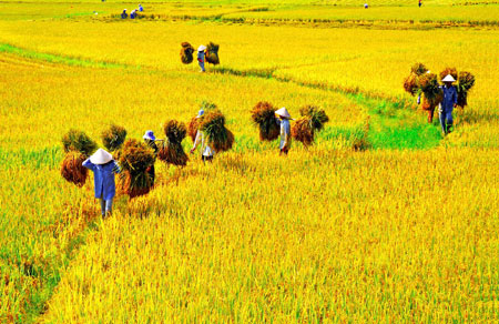 Lifting of farmland limit to spur exports of produce