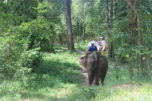 Yok Don National Park, protect biodiversity, Vietnam economy, Vietnamnet bridge, English news about Vietnam, Vietnam news, news about Vietnam, English news, Vietnamnet news, latest news on Vietnam, Vietnam