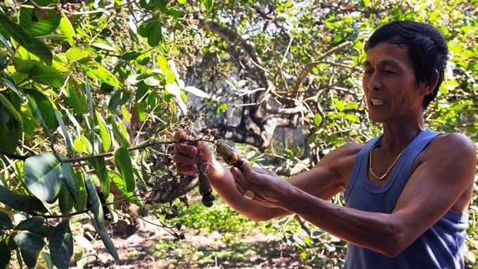 Dong Nai loses $61.8m worth of crops to untimely rain, social news, vietnamnet bridge, english news, Vietnam news, news Vietnam, vietnamnet news, Vietnam net news, Vietnam latest news, vn news, Vietnam breaking news