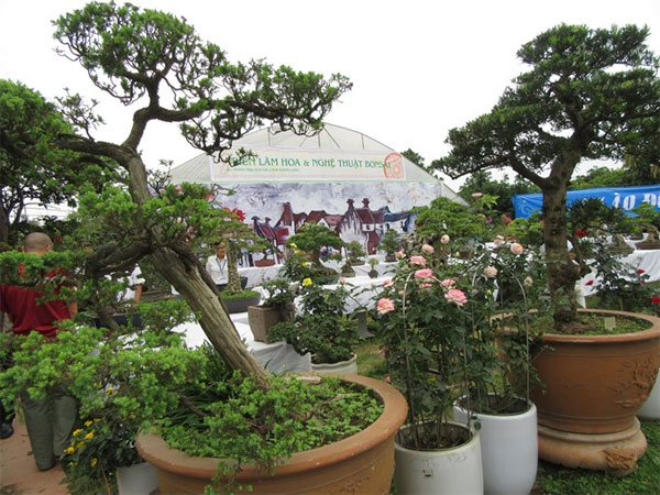Bonsai, rose show cheers nature lovers